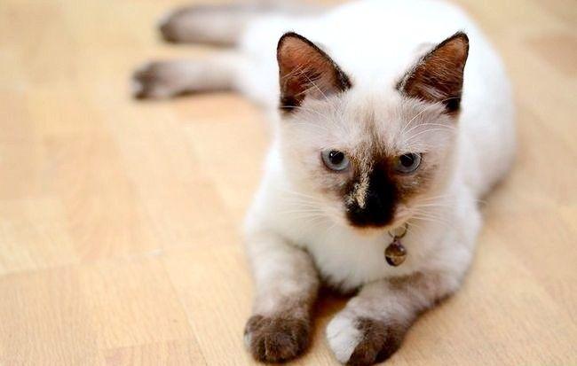 निर्जलीकरण के लिए बिल्लियों की जांच कैसे करें