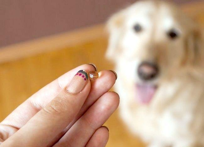 कुत्तों में सूखी त्वचा को हटा दें चित्र 4