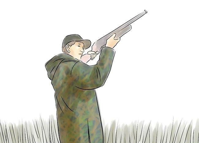 कैसे शिकार बतख शुरू करें