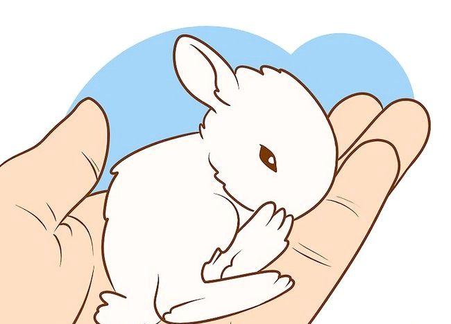 शीर्षक वाला चित्र सुनिश्चित करें कि आपका खरगोश आपको सर्वश्रेष्ठ जीवन दे सकता है चरण 5