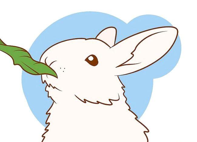 शीर्षक वाला चित्र सुनिश्चित करें कि आपका खरगोश आपको सर्वश्रेष्ठ जीवन दे सकता है चरण 6