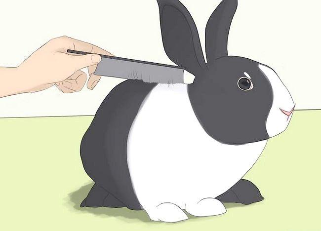 कैसे अपने पालतू खरगोश में तैरने के लिए