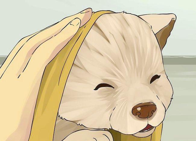 एक छोटा कुत्ता एक स्नान चरण 15 दे दो चित्र