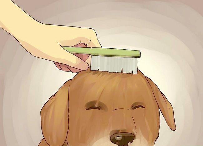एक छोटे से कुत्ते को स्नान चरण 17 शीर्षक वाला चित्र