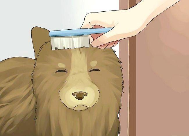 एक छोटा कुत्ता एक स्नान कदम 6 दे दो चित्र