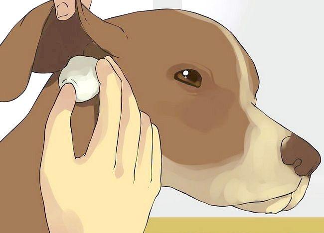 एक छोटा कुत्ता एक स्नान चरण 8 नाम वाली तस्वीर