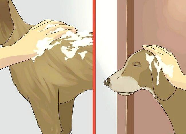 एक छोटा कुत्ता एक स्नान कदम 10 दे दो चित्र