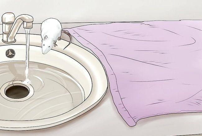 चित्रित करें आपका पेट चूहा चरण 3
