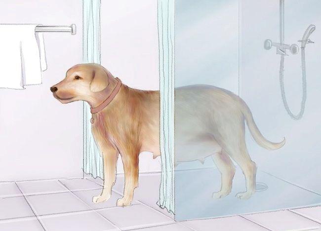 चित्रित किया गया एक बच्चा एक गर्भवती कुत्ता चरण 1