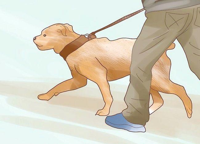 चित्र शीर्षक में कुत्तों में किडनी स्टोन्स को रोकें चरण 7