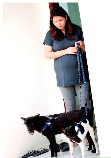 स्टेप 4 पर पंसद के साथ ही वही दो कुत्तों का शीर्षक चित्र