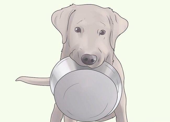कुत्ते के चरण 14 में प्रीवेंन्ट मेन्ज नामक चित्र
