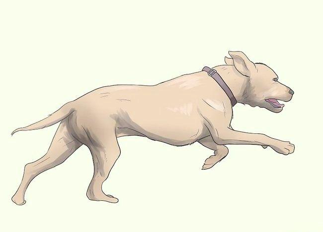कुत्ते के चरण 18 में प्रीवेंन्ट मेन्ज नामक चित्र