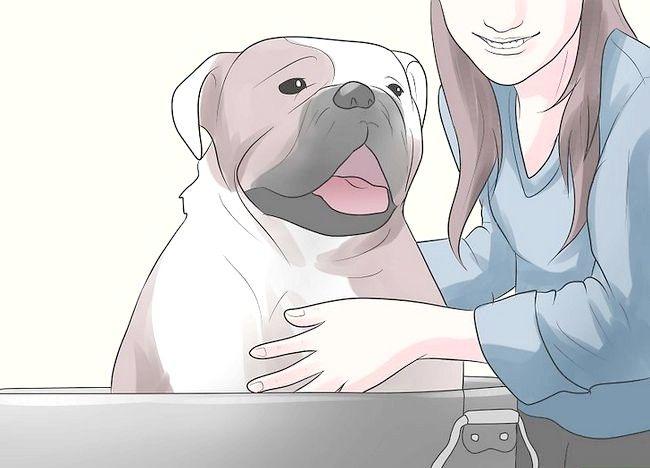 कुत्ते के चरण 22 में रोकें बॉक्स का शीर्षक