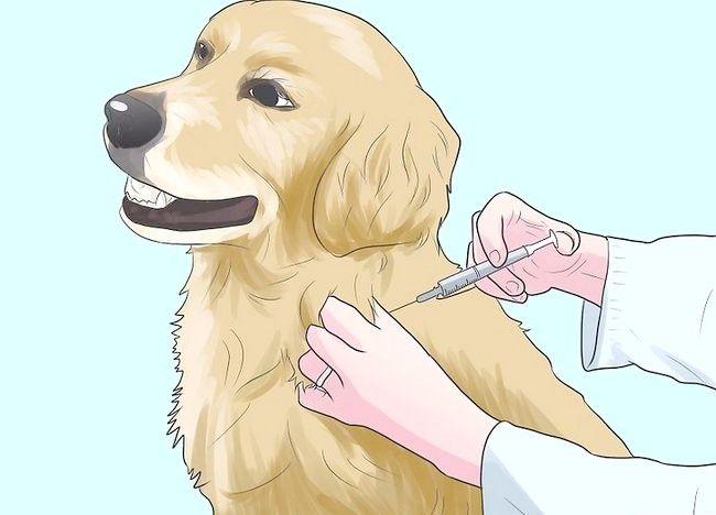 कुत्तों में चरण 3 के बारे में चित्र रोकें