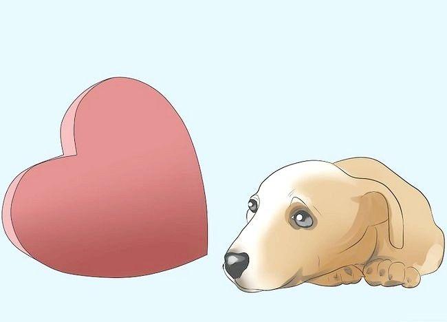 कुत्तों के चरण 4 में तस्वीर रोकें