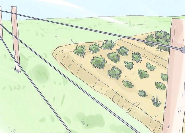 हाथी के चरण 6 के बारे में आपका घर और गार्डन संरक्षित शीर्षक वाला चित्र