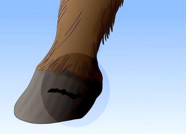 पिक्चर शीर्षक से एक अबाधित घोड़ा बचाव चरण 15