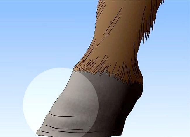 पिक्चर शीर्षक से एक अबाधित घोड़ा बचाव 16
