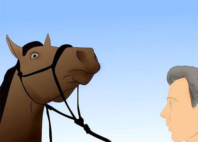 पिक्चर शीर्षक से एक अबाधित घोड़ा बचाव 20