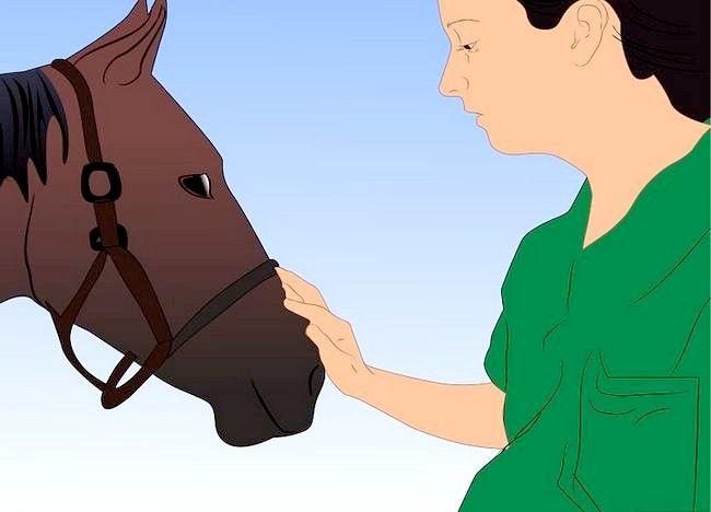 पिक्चर शीर्षक से एक अबाधित घोड़ा बचाव 21