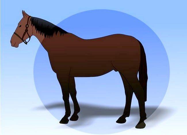 एक अबाधित घोड़ा बचाव 22 शीर्षक चित्र