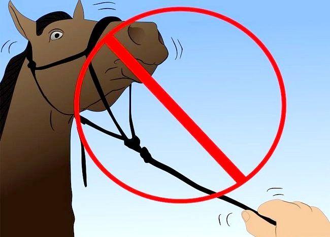 एक अबाधित घोड़ा बचाव 26 शीर्षक चित्र