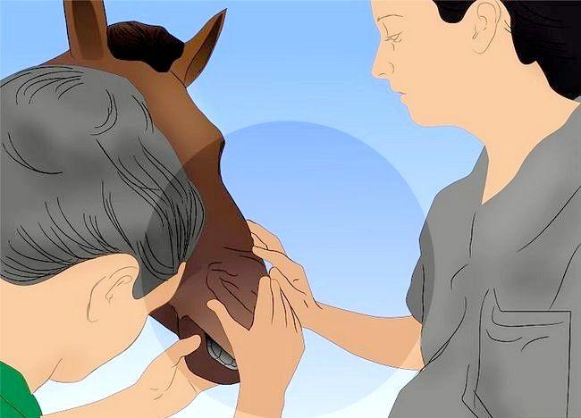 पिक्चर शीर्षक से एक अबाधित घोड़ा बचाव 6