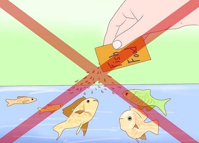 एक मछलीघर में कैसे घोंघे से छुटकारा मिलता है