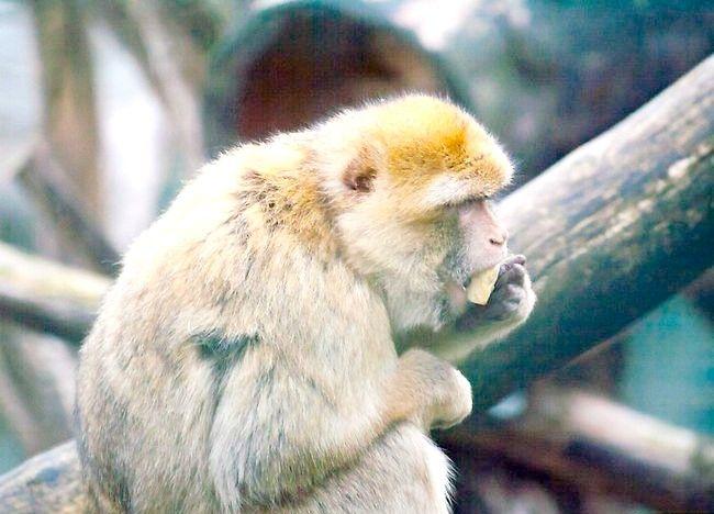एक पशु व्यवहारकर्ता चरण 3 के नाम से चित्रित किया गया चित्र
