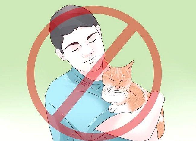 बिल्लियों में टिप एपिलेप्सी शीर्षक वाले चित्र चरण 11