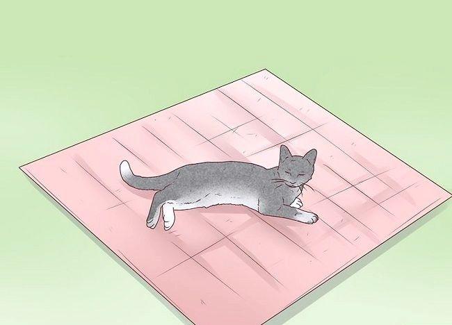 बिल्लियों के चरण 12 में चित्र एपिलेप्सी का शीर्षक