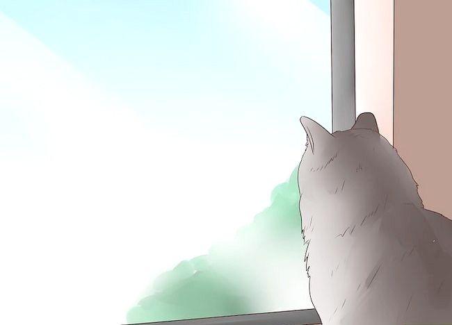 बिल्लियों में चित्रा 13 में इलाज एपिलेप्सी नामक चित्र