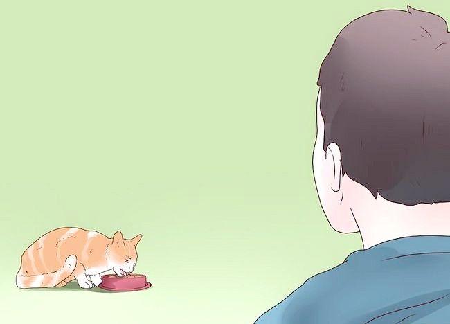 बिल्ली 14 में इलाज एपिलेप्सी शीर्षक वाला चित्र