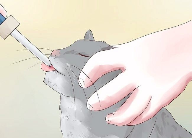 बिल्लियां चरण 3 में चित्र एपिलेप्सी का शीर्षक