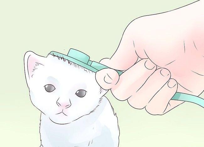 बिल्लियों के चरण 6 में चित्र एपिलेप्सी का शीर्षक
