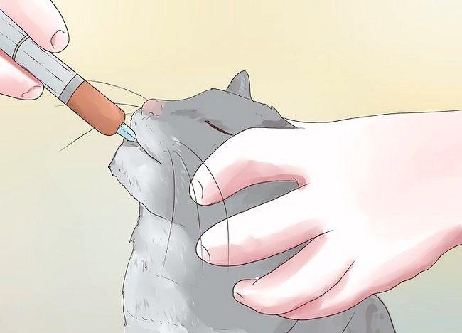 बिल्लियों में टिप एपिलेप्सी शीर्षक वाले चित्र चरण 8