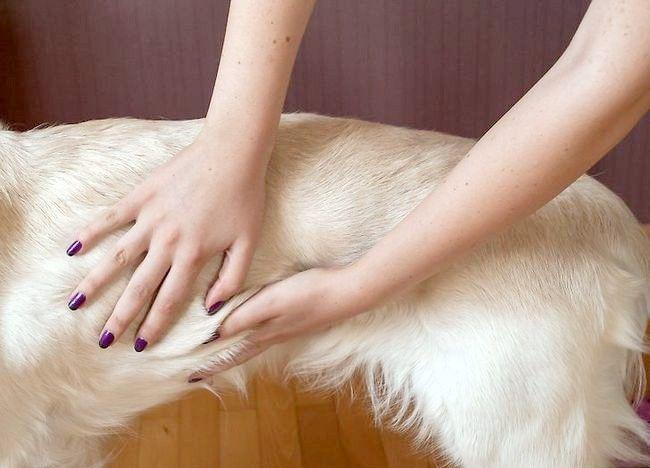 कुत्ते के लिए छिलका और त्वचा उपचार के लिए नारियल तेल का उपयोग करें शीर्षक चरण 5