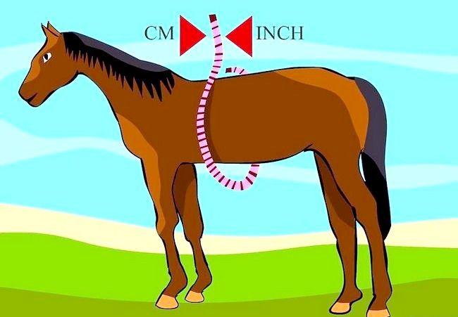 एक घोड़े वजन करने के लिए एक टेप माप का उपयोग कैसे करें