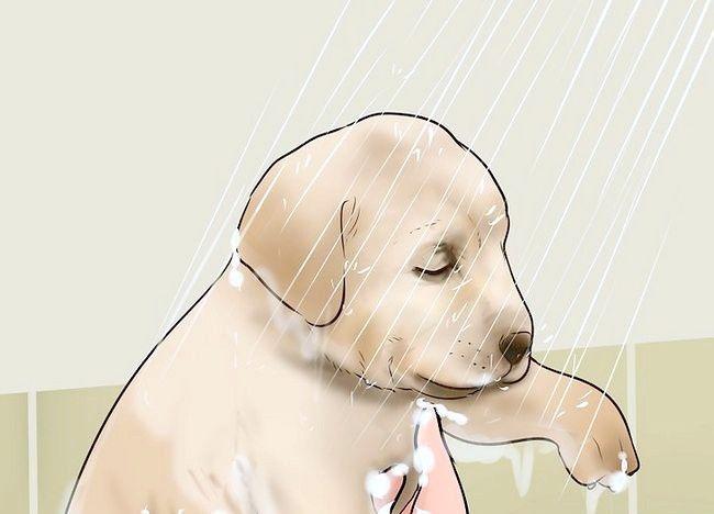 कुत्ते के लिए ऐप्पल साइडर सिरका का प्रयोग करें चित्र 12