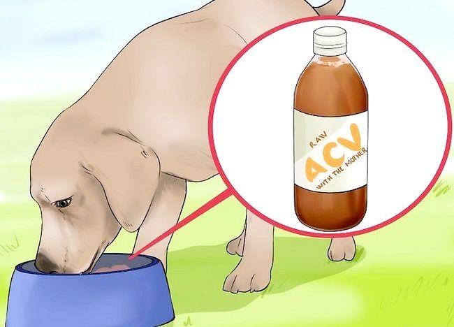 चित्र शीर्षक कुत्तों के लिए एप्पल साइडर सिरका का प्रयोग करें चरण 4
