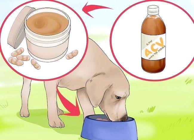 चित्र शीर्षक कुत्ते के लिए एप्पल साइडर सिरका का प्रयोग करें चरण 6
