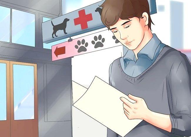 कैसे घर पर रेबीज के खिलाफ एक कुत्ता टीका टीका