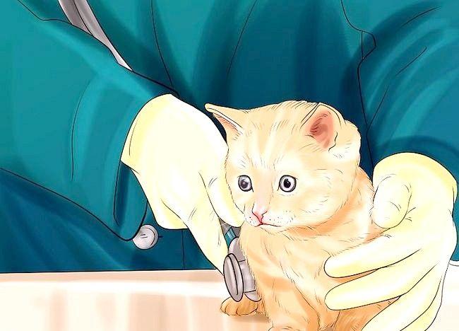 एक बिल्ली का बच्चा कैसे खेलें