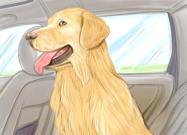 कैसे एक कुत्ते के साथ एक कार यात्रा के लिए
