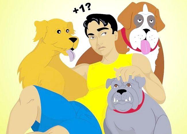 कैसे विभिन्न कुत्तों के साथ एक घर में रहने के लिए